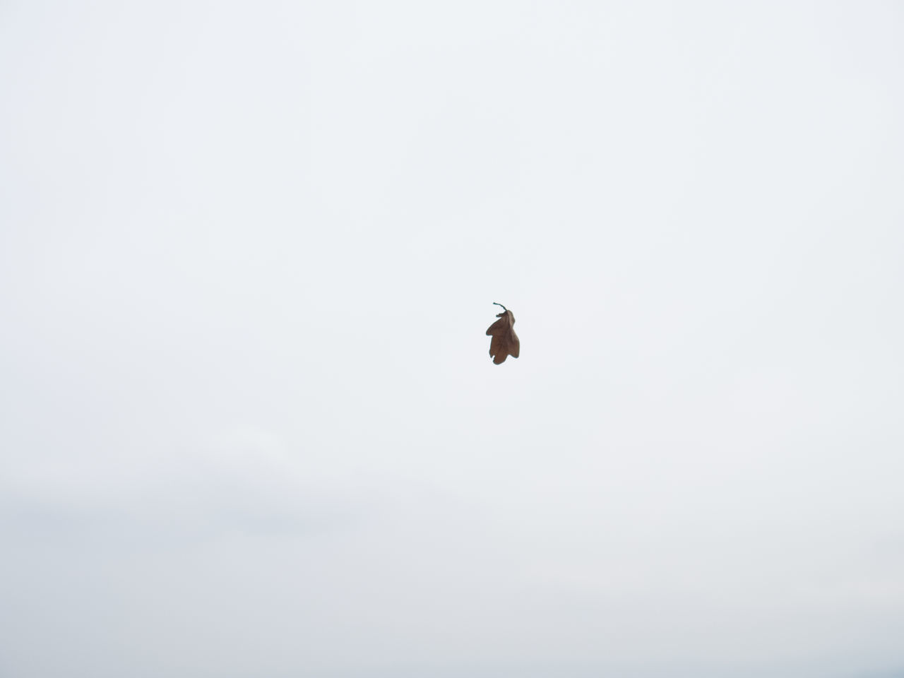 flying, bird, animals in the wild, copy space, nature, one animal, mid-air, animal themes, spread wings, low angle view, outdoors, day, no people, animal wildlife, sky, clear sky, beauty in nature, bird of prey