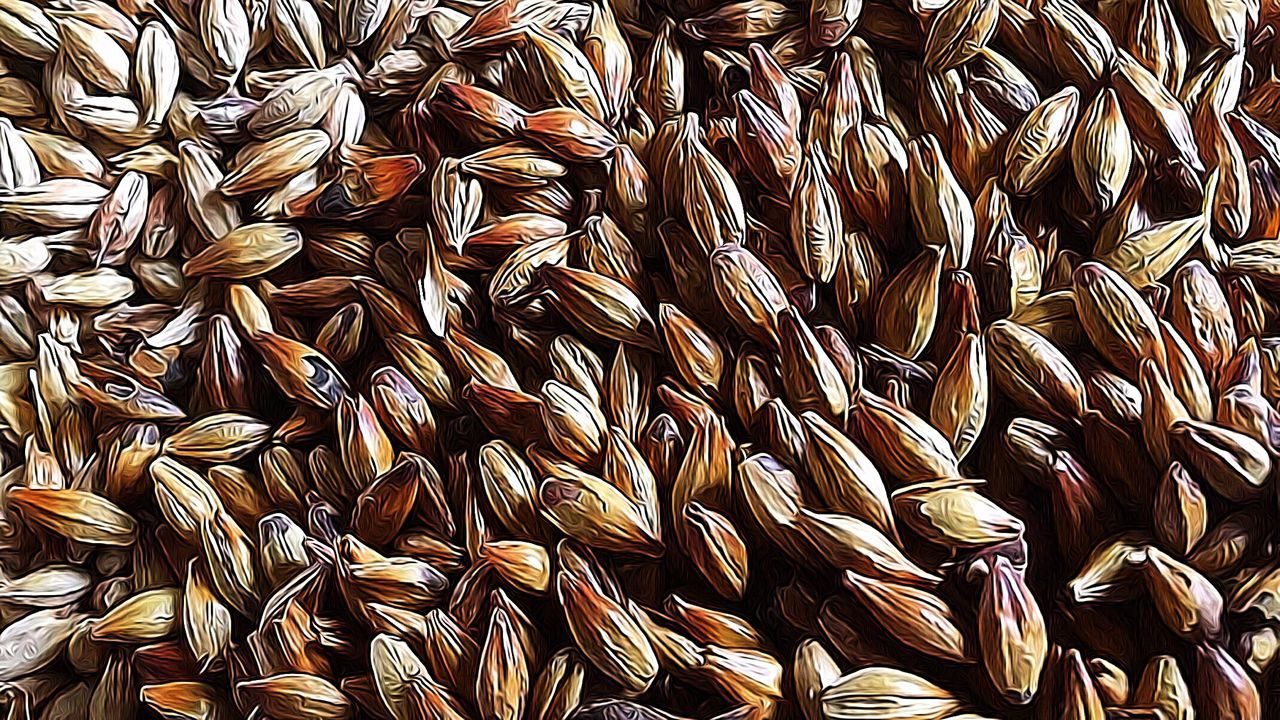 Backgrounds Abundance Full Frame Large Group Of Objects No People Indoors  Close-up Food Seed Day Taking Photos Eye4photography  Close Up Macro Photography