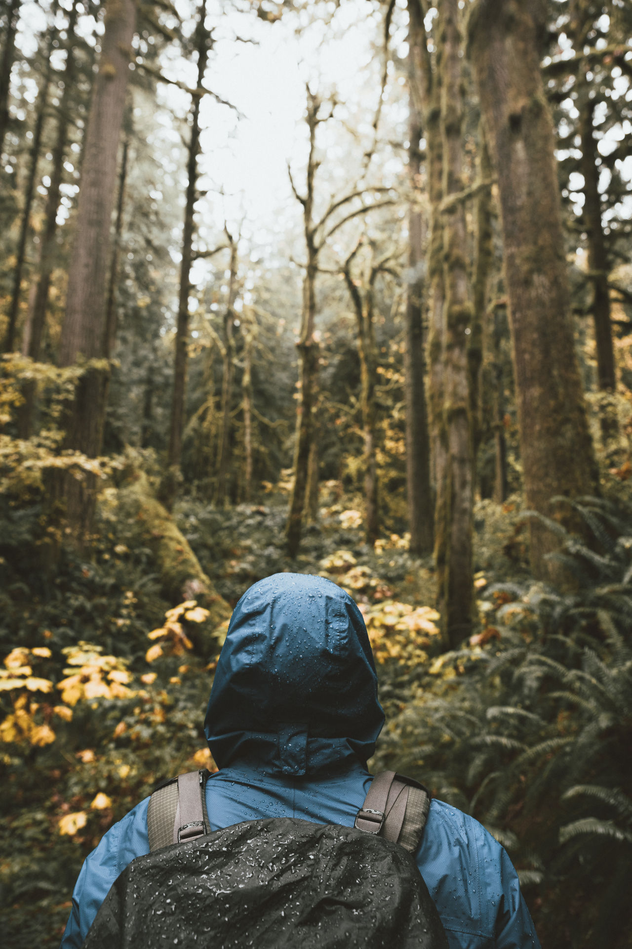 If only the whole world looked like this... Forest Tree Vertical One Person Nature WoodLand Cold Temperature Rear View Leisure Activity Warm Clothing People Hiking Winter Environment Lifestyles Rain Forest Wilderness Scenics Beauty In Nature Tranquil Scene Person Outdoors