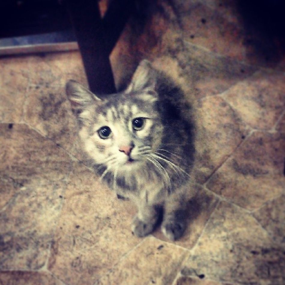 Such a cute cool looking cat just had to feed! Cat Cute Pet