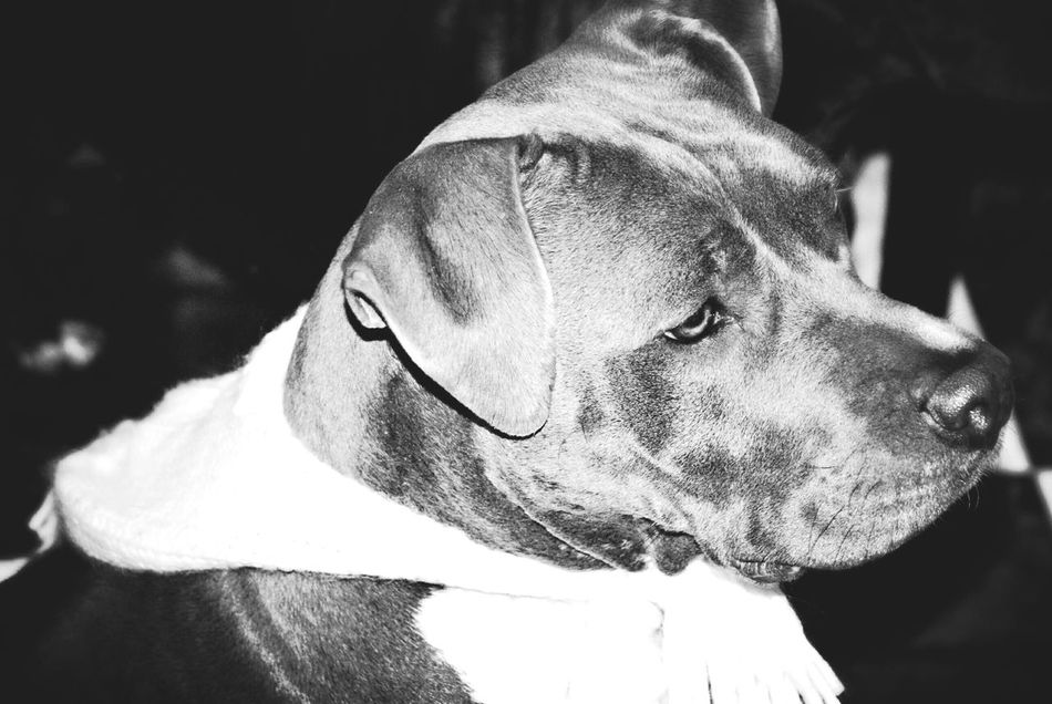 Mi pequeña princesa Wave Surf Dogmodels Smiling Pitbullove Pets Canine Loyalty Pitbullsofficial Pitbullsofinstagram Waterfront Domestic Animals Beach Happiness Real People Tranquility Animal Animal Themes Pet Clothing No People Two Animals First Eyeem Photo