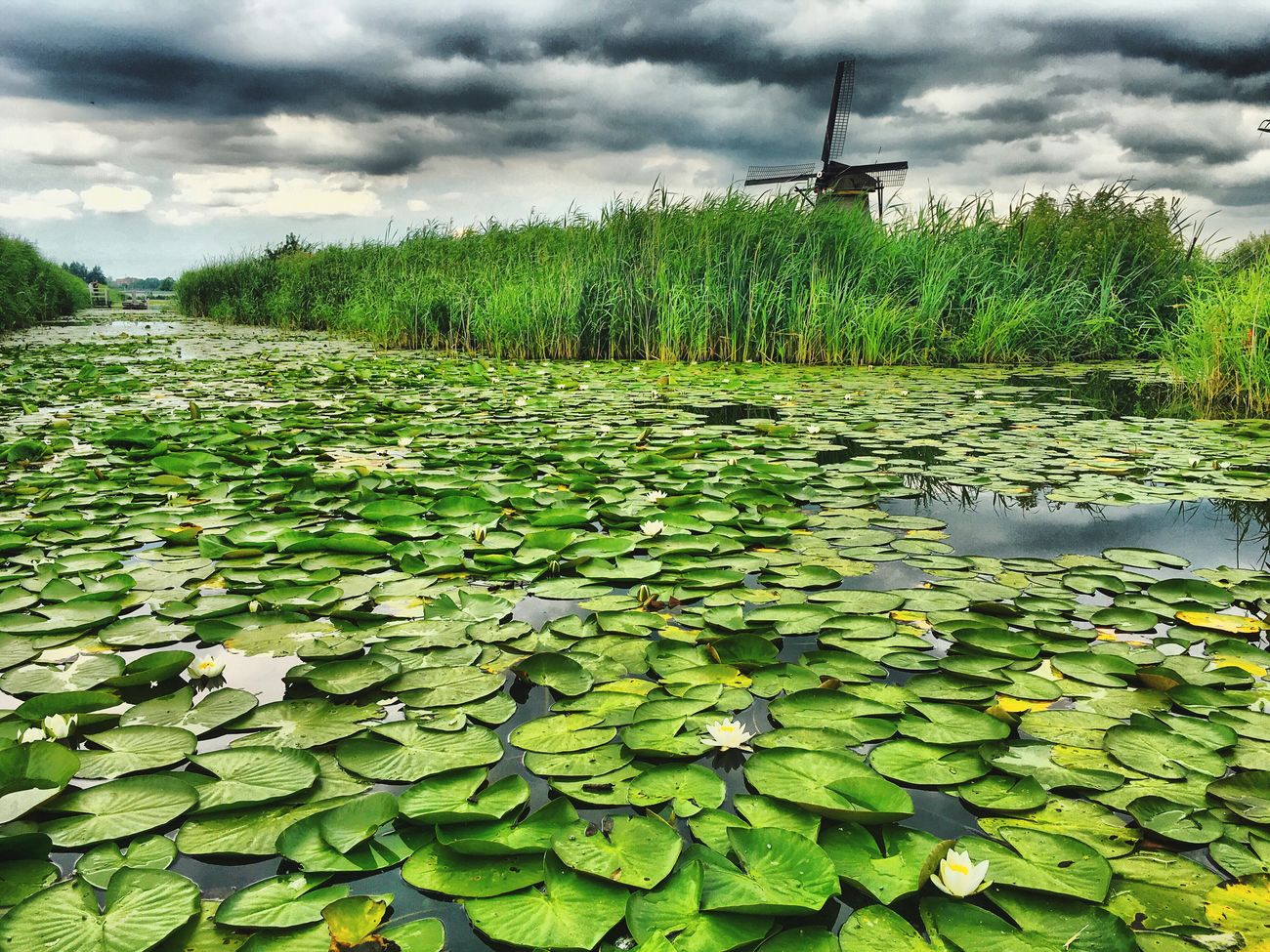 Windmill Water Reflections Nature Clouds And Sky Kinderdijk Nederland