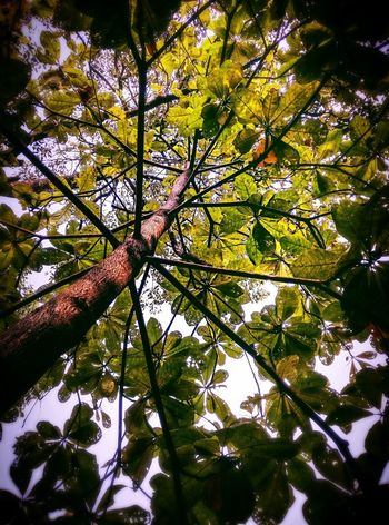 'Perspective' Nature Green Tree Branches Branches And Sky Branches And Leaves Life Nature Photography Naturelovers Perspective Photography Photographer Smartphonephotography Frankrchrd EyeEm Best Shots EyeEm Gallery Colour Of Life