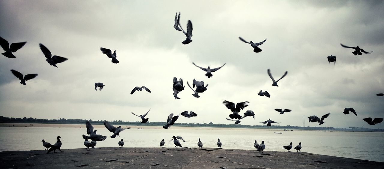 Pigeons Flying By Lake Against Cloudy Sky