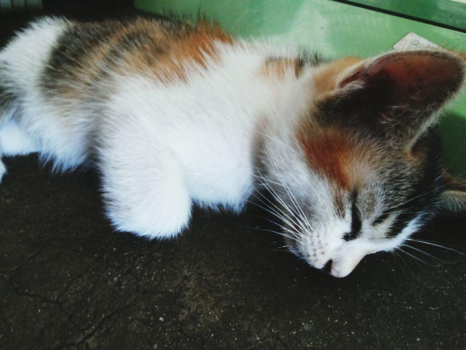 เหนื่อยละ ขอสักงีบก่อนนะ Cat Animal แมวเป็นสัตว์ที่คิดจะครองโลก