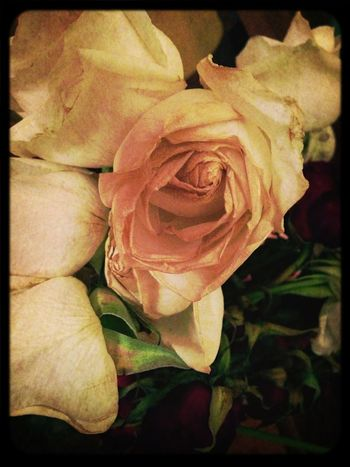 My beautiful birthday roses, I love when they wilt