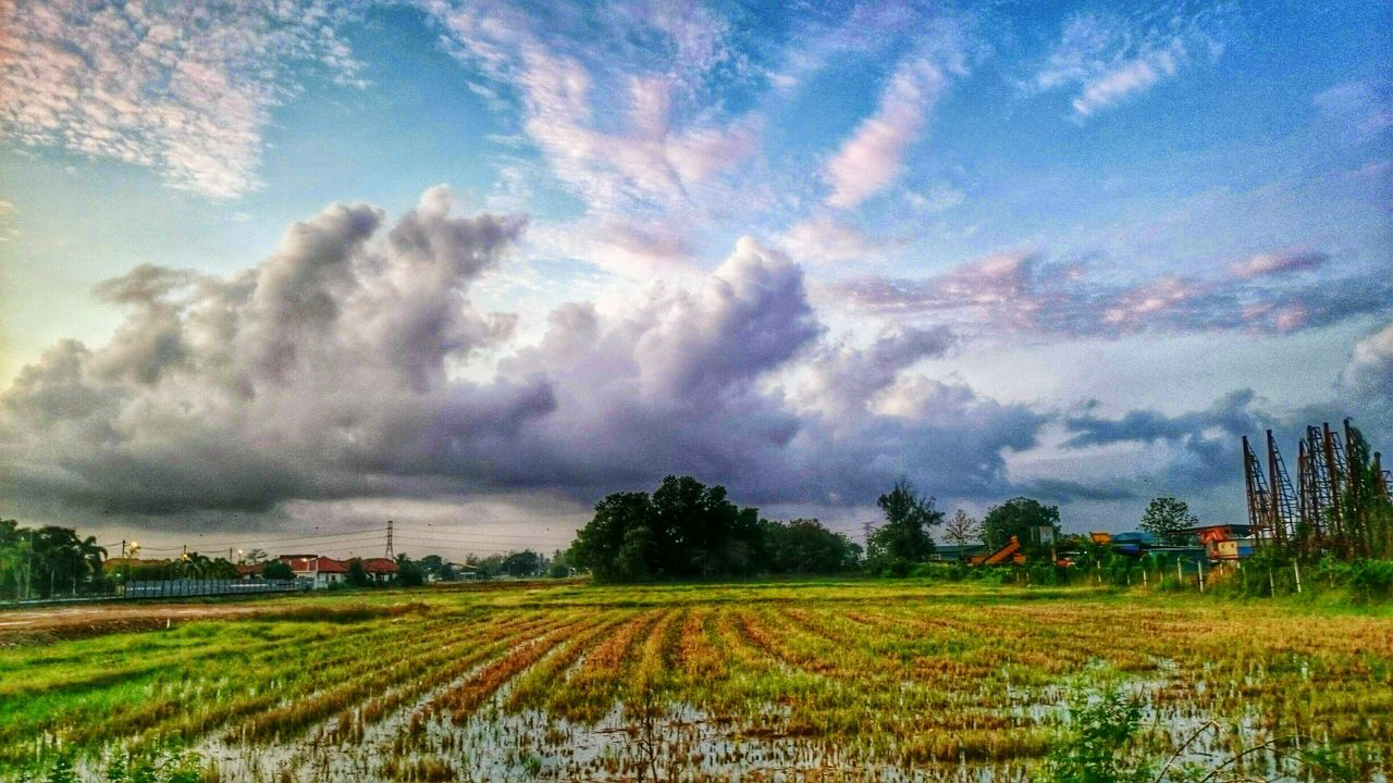 cloud - sky, field, sky, agriculture, nature, landscape, tranquility, growth, beauty in nature, scenics, tranquil scene, rural scene, tree, day, no people, outdoors, storm cloud