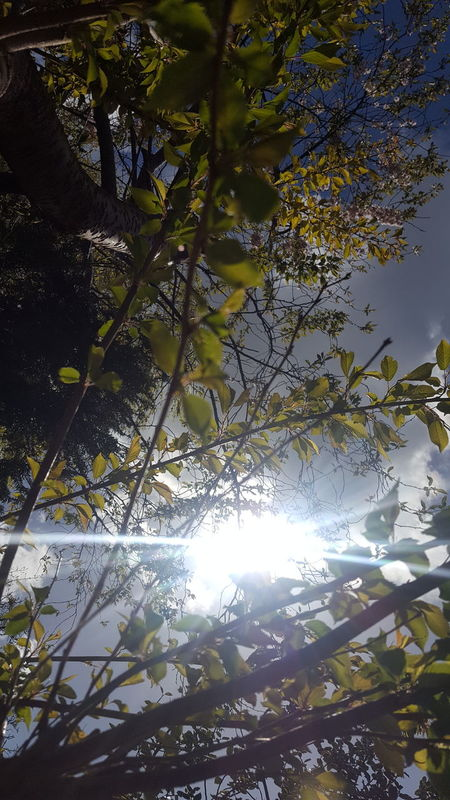 No Filters Or Effects Just A Day Sunny Treelife In My Garden Looking Up OpenEdit Spring Telling Stories Differently