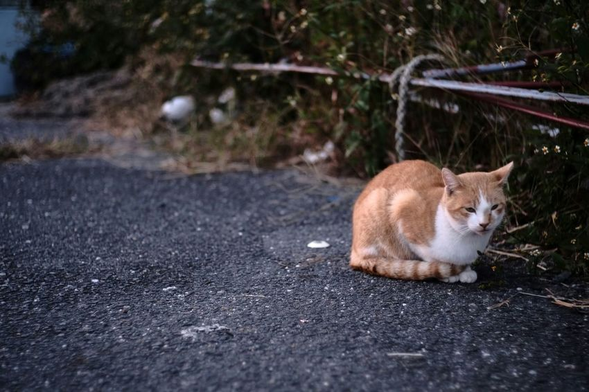 The lakeside story Japan Japanese  Cat Cats Street Cats Street Cat Lake Lakeside Voigtlnder Voightlander Nokton Classic 40mm/F1.4 SC Fujifilm X-Pro1 X-Pro1