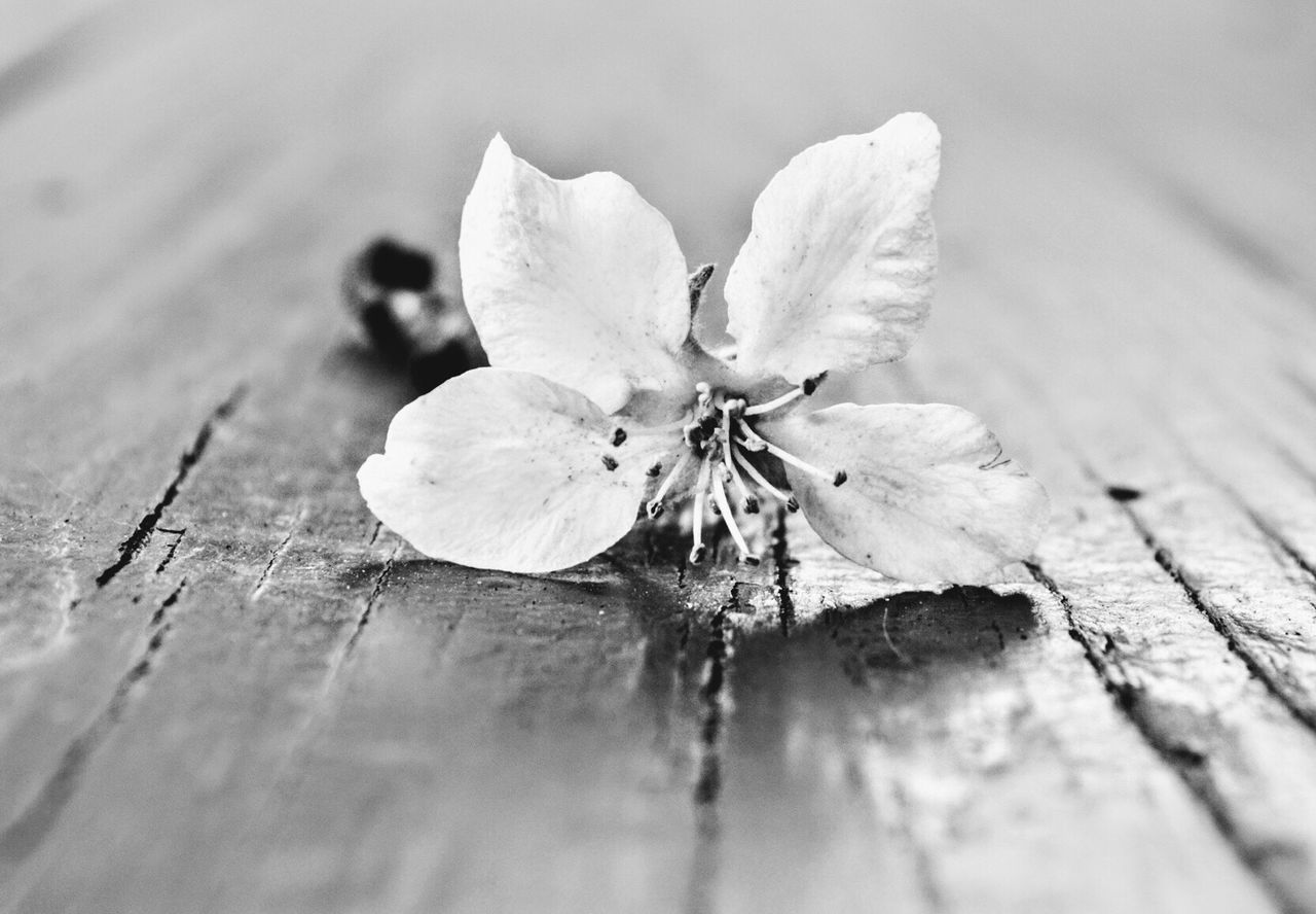 Fragility Nature Close-up Petal Flower Day Beauty In Nature No People Flower Head Freshness Outdoors Black And White Photography Flower Close Up Flower White Flowers, Nature And Beauty Flower Blossom Flower Collection Plant Freshness
