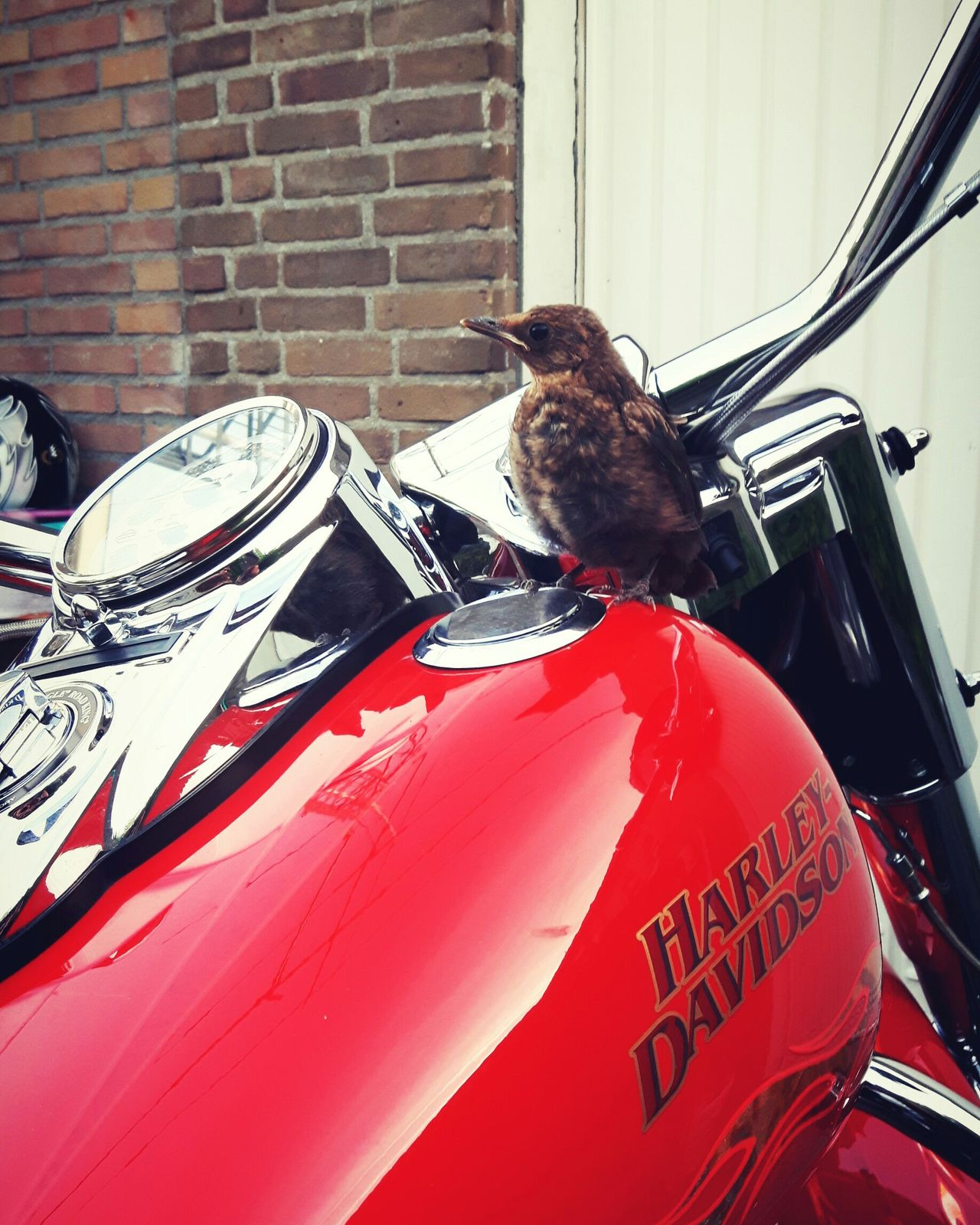 Red Day No People Close-up Motor Motorcycle Harleydavidson Bird Luxury Discovering Photography Photograph Beauty Sunlight Travel Destinations Upper Class Fast Let's Go. Together.