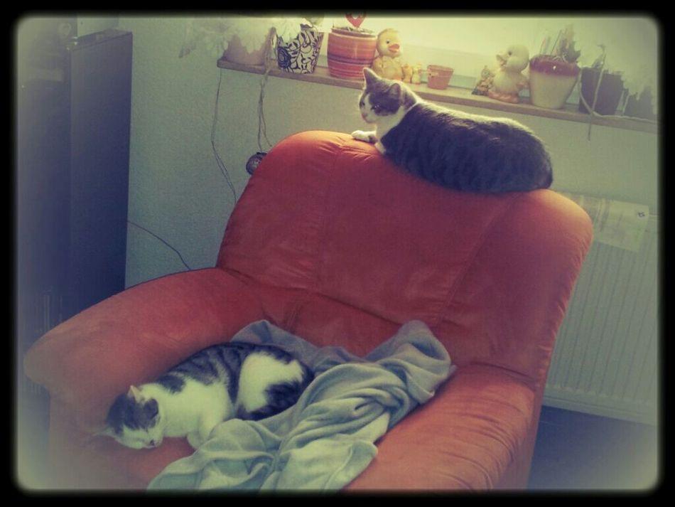 Meow Love Ones