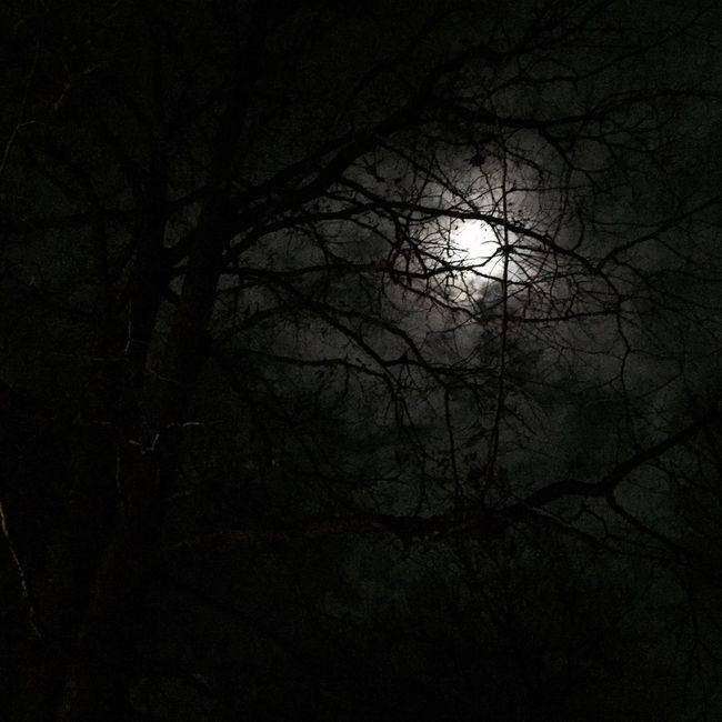 Bare Tree Tree Branch Silhouette Tranquil Scene Beauty In Nature Nature Dark Outdoors Back Lit Moon Overnight Success Monochrome Photography Blackandwhite Black And White Black & White Sky Cloud - Sky Non-urban Scene Remote Autumn Night