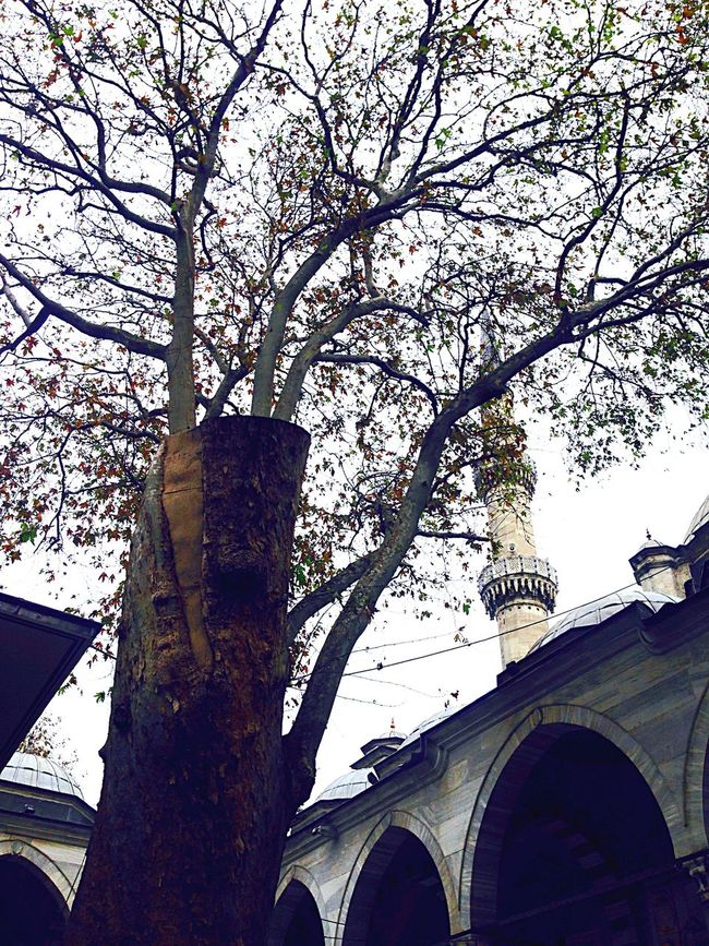 Fall Beauty Dry Leaves Dry Tree Mosque Travel By Puk✈️ From My Point Of View Eye4photography  Streetphotography Eye Em Around The World Enjoying The View