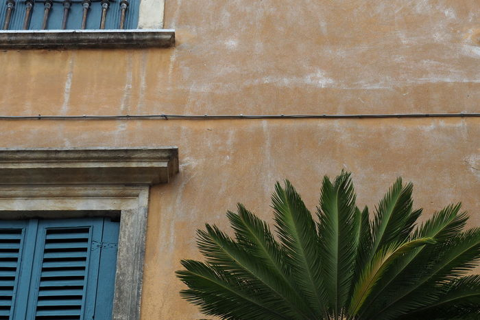 Balcony Palm Tree Abstract Built Structure Close-up Closed Low Angle View Mediterranean  No People Outdoors Palm Trees Plant Wall Windows Wooden Shutters Yellow