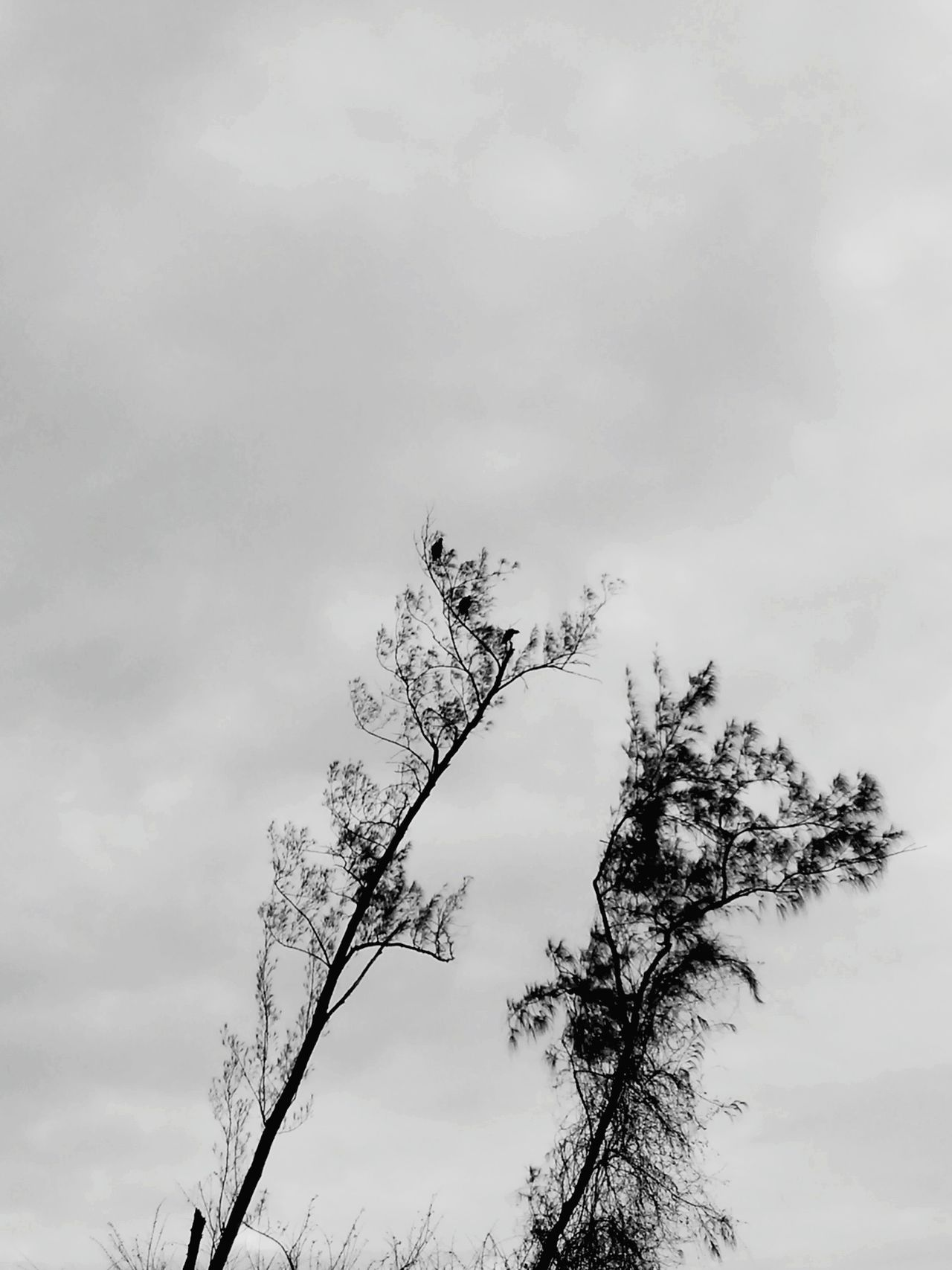 Black & White Black And White Photography Black And White Collection  Monochrome Hugging Trees Wild Birds Cloudy Day EyeEm Nature Lover Peaceful And Quiet Taking Photos