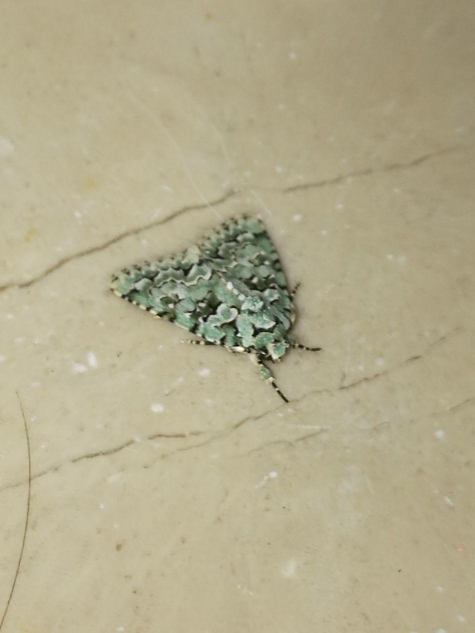 Strangenature Butterflies Mimetic