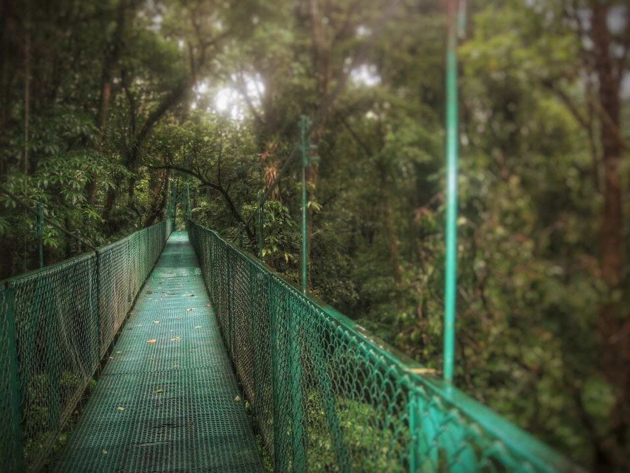 railing, tree, the way forward, nature, bridge - man made structure, growth, outdoors, no people, day, beauty in nature, footbridge
