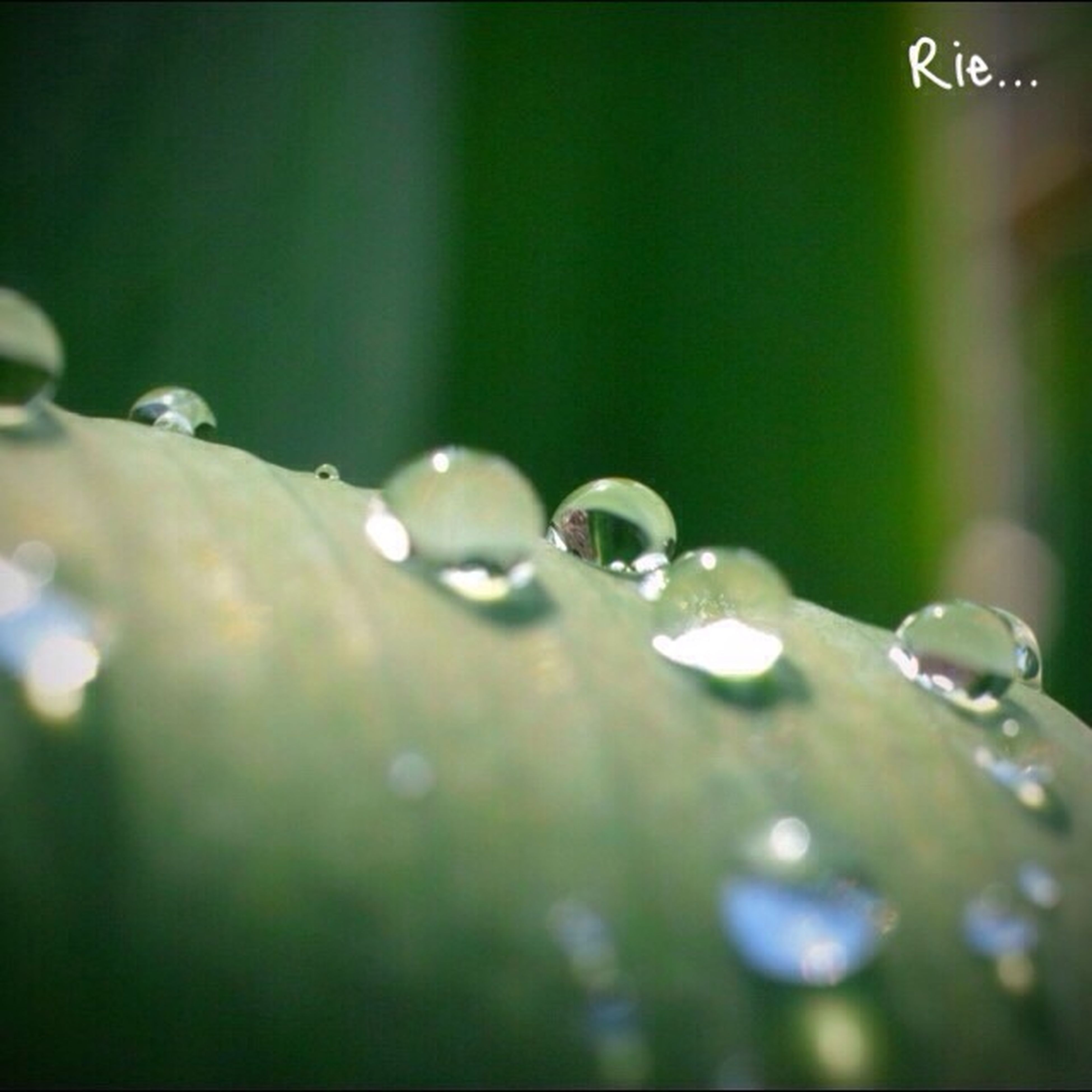 drop, close-up, water, wet, focus on foreground, selective focus, dew, freshness, fragility, growth, beauty in nature, nature, plant, water drop, purity, raindrop, green color, droplet, detail, day