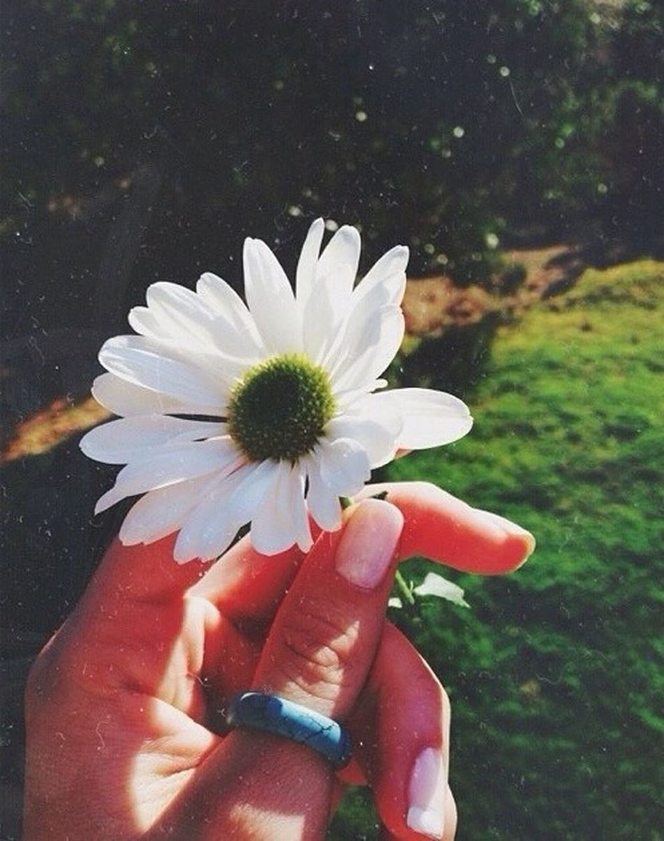 Beauty In Nature Close-up Day Flower Flower Head Focus On Foreground Fragility Freshness Holding Human Body Part Human Finger Human Hand Nature One Person Outdoors People Personal Perspective Petal Real People Unrecognizable Person