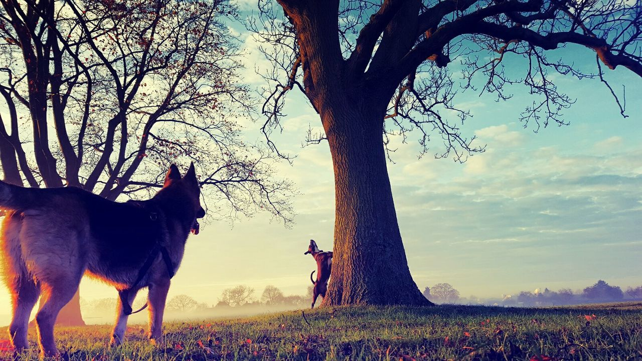tree, animal themes, domestic animals, field, mammal, one animal, nature, sky, bare tree, dog, tree trunk, outdoors, day, standing, pets, beauty in nature, landscape, no people, grass, growth