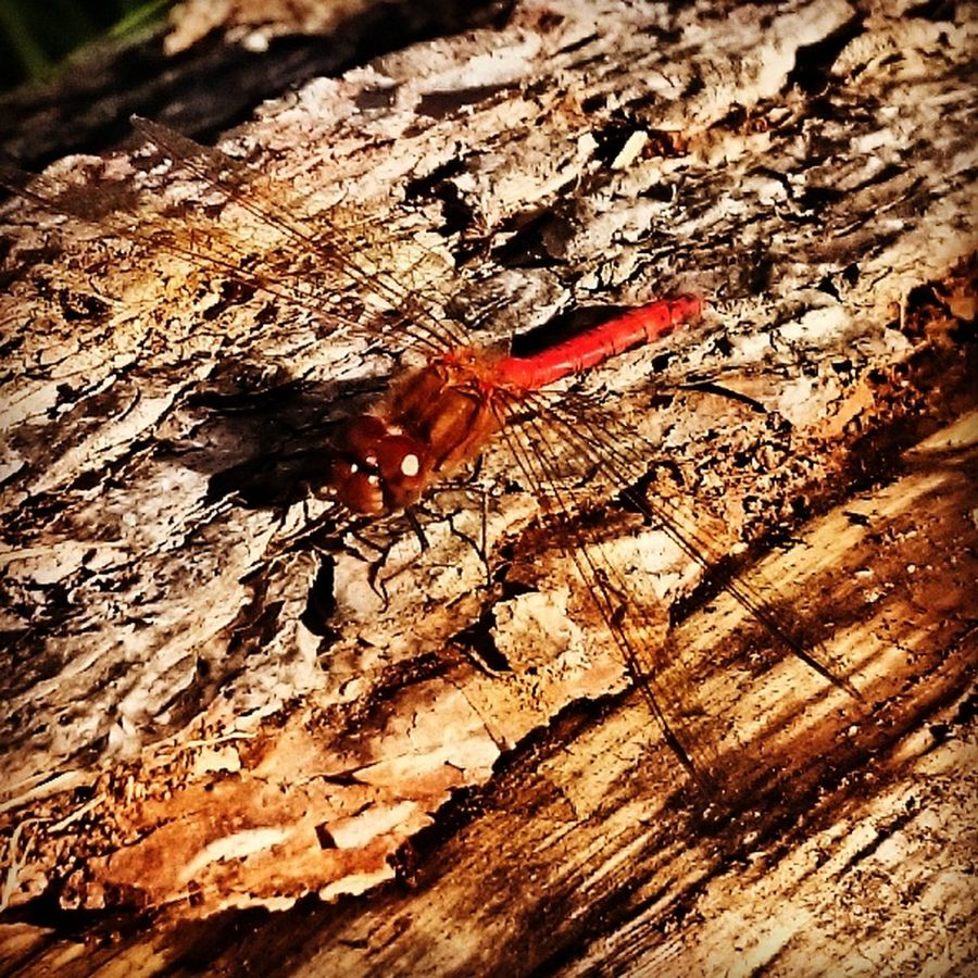 Bugg Wood Outside Photography Nature Nature_collection Nature Photography Colseup Close-up Enjoying Life Colors