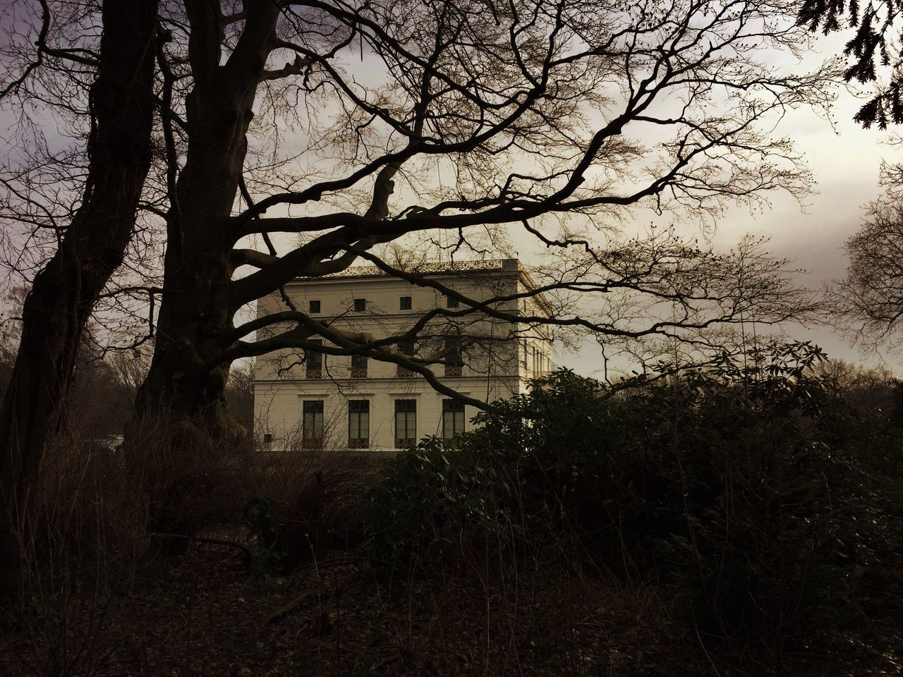 Tree Architecture Building Exterior Built Structure Landscape Earlymorning  Early Morning Silhouette_collection In A Quiet Moment Romantic Landscape Old Buildings Old Building  Classic Elegance Classical Architecture