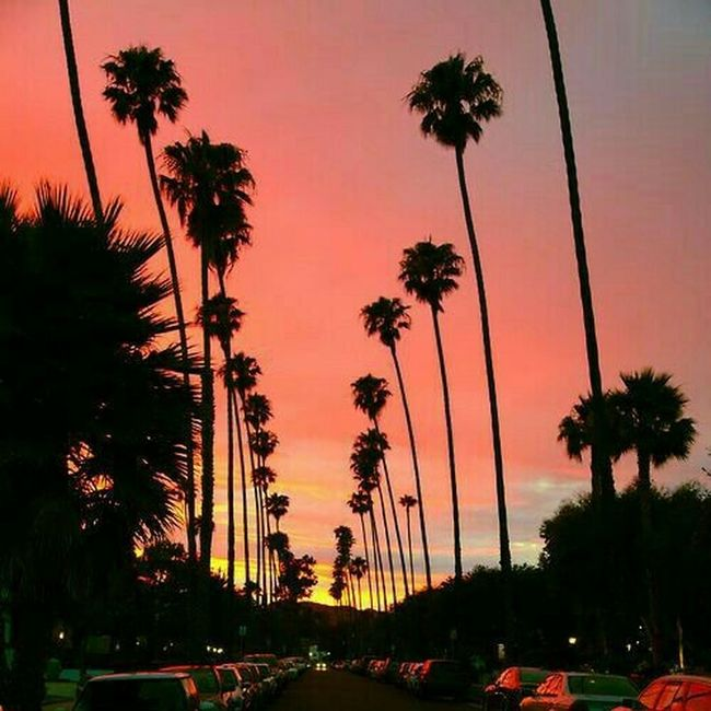 Nature Day Sky Tree Palm Tree No People Sunset Silhouette Outdoors Water
