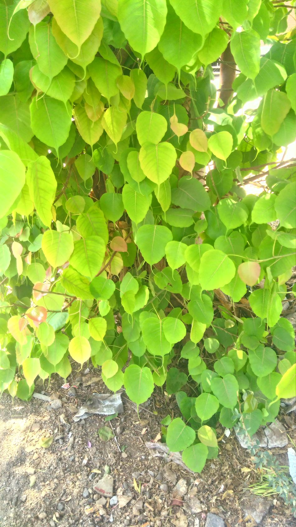 New arrival of leafs Leaf Green Color Growth Outdoors Freshness