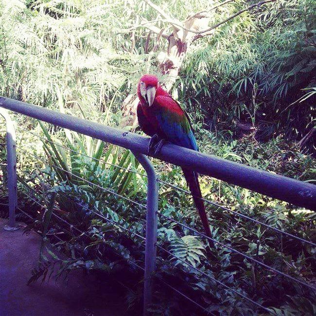 Temaiken Papagayo Parrot
