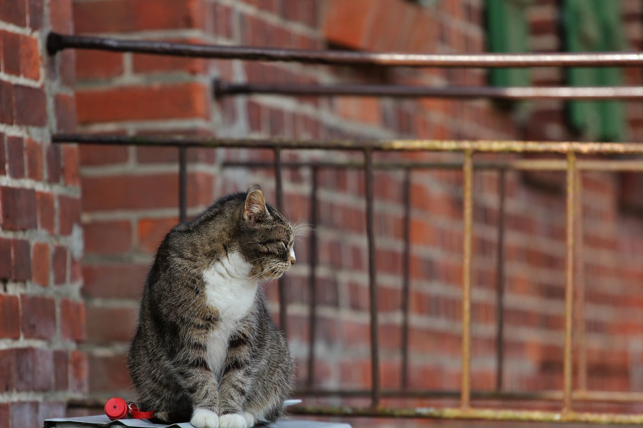 domestic cat, animal themes, one animal, mammal, pets, feline, cat, domestic animals, no people, outdoors, focus on foreground, sitting, day, close-up