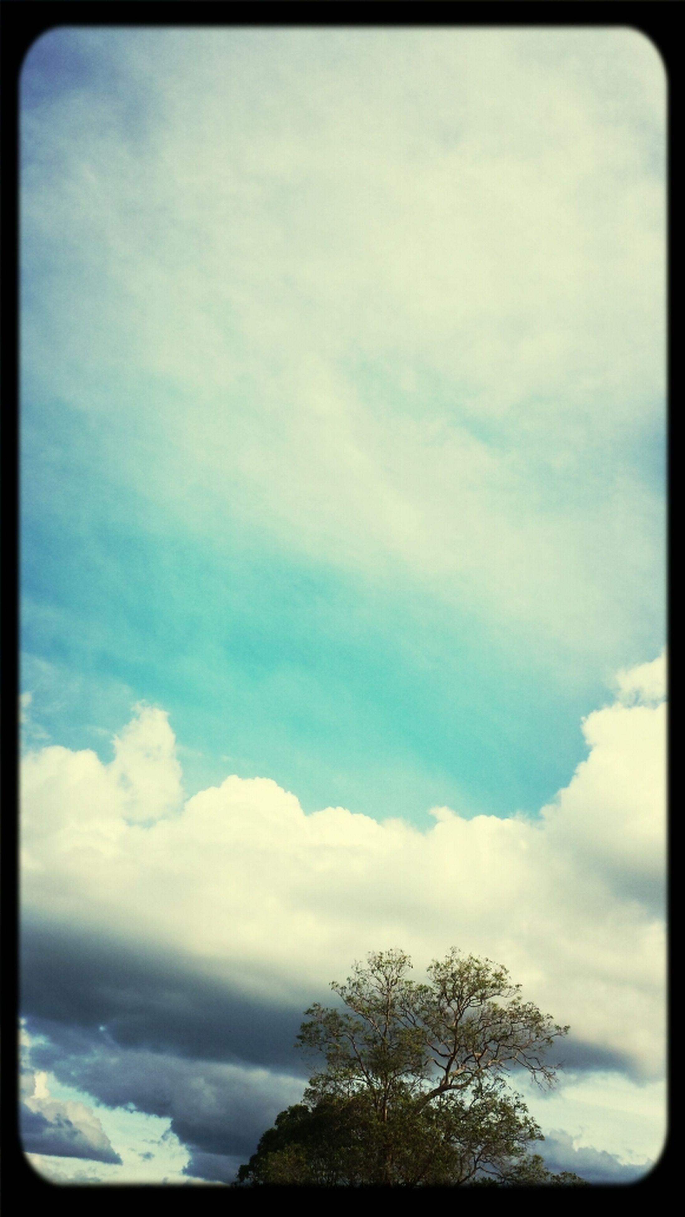 sky, transfer print, low angle view, cloud - sky, tree, beauty in nature, tranquility, scenics, cloudy, tranquil scene, auto post production filter, cloud, nature, blue, silhouette, outdoors, day, idyllic, no people, cloudscape