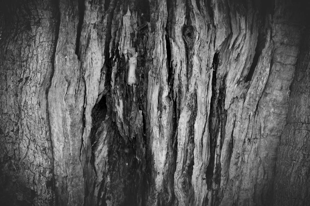 Abstract Backgrounds Black Color Close-up Dark Day Extreme Close-up Flat Full Frame Knotted Wood Macro Nature No People Old Tree Olive Olive Tree Outdoors Pattern Textured  Tree Tree Trunk Weathered Wood - Material Wood Grain