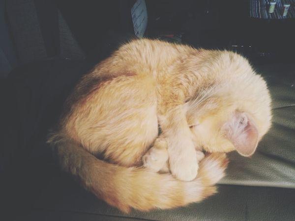 Cutecats Majin Cat Lovers