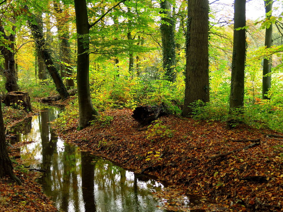 At the small creek, running through the woods .. Autumn Autumn Collection Autumn Colors Beauty In Nature Brook Creek Creekside Day Forest Forest Path Forestwalk Green Color Growth Nature No People Outdoors Reflection Scenics Stream Tranquil Scene Tranquility Tree Water Woods