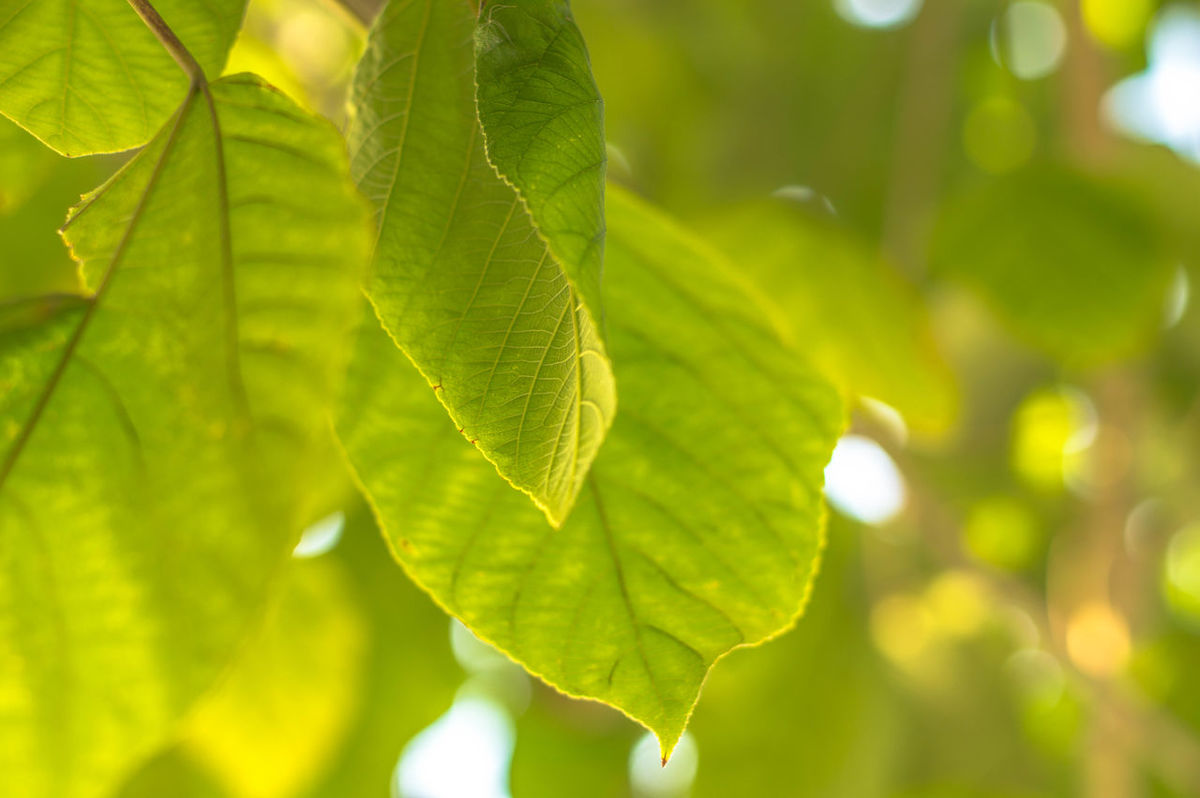 Leaf Nature Close-up Green Color Beauty In Nature Plant Tree Growth Branch No People Summer Environment Naturephotography Foest🌳 Beauty In Nature Nature Outdoors Freshness Plant Part Day