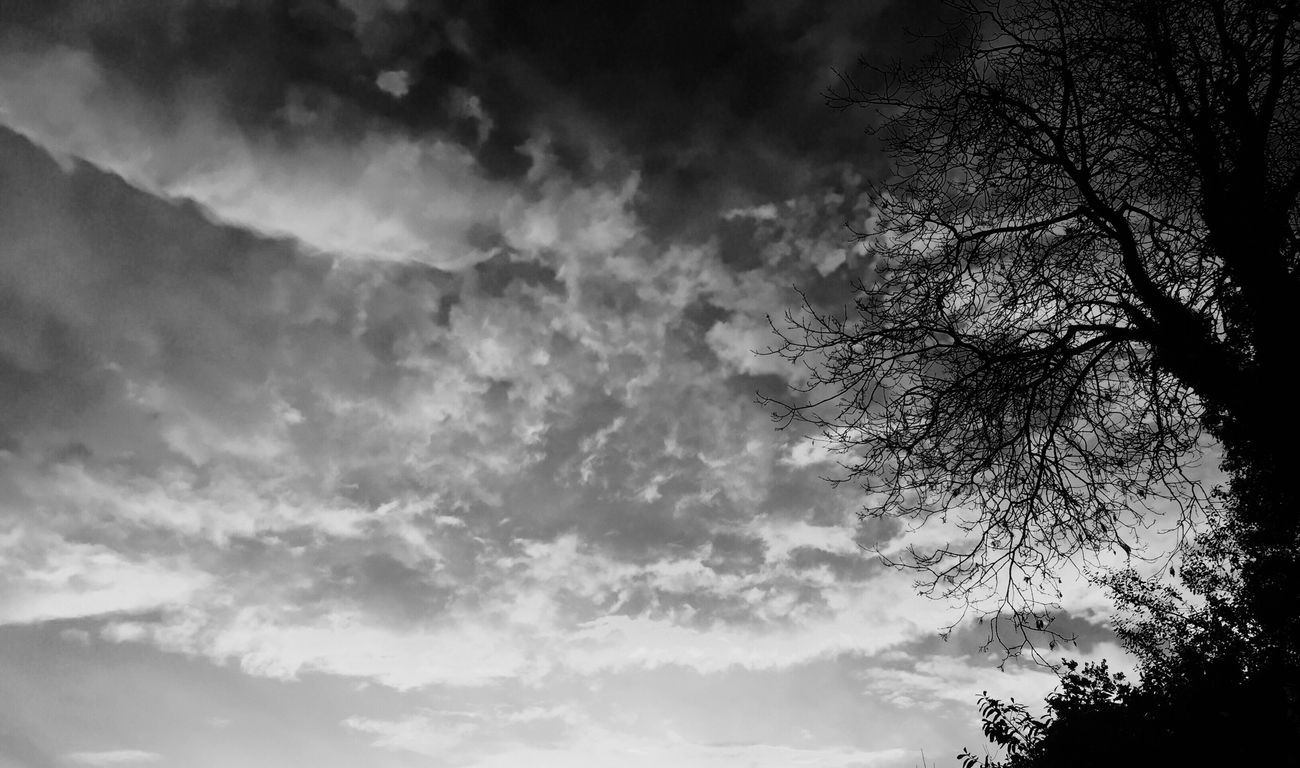 Sky Tree Nature Black&white Sunset Cloud Landscape Eye4photography  Blackandwhite Simplicity Sky Collection