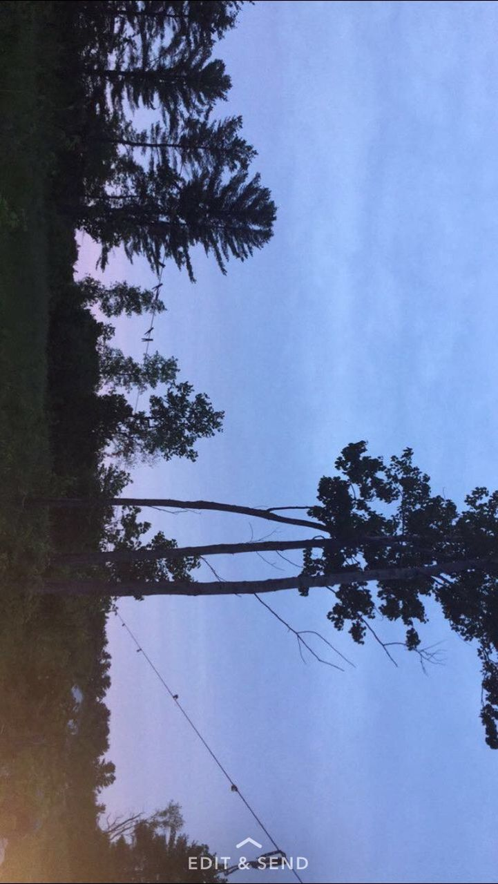 tree, no people, cable, nature, outdoors, day, growth, sky, beauty in nature, water