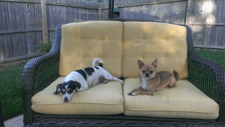 Pet Portraits Pets Domestic Animals No People Outdoors Lying Down Dog Lounging Dogslife