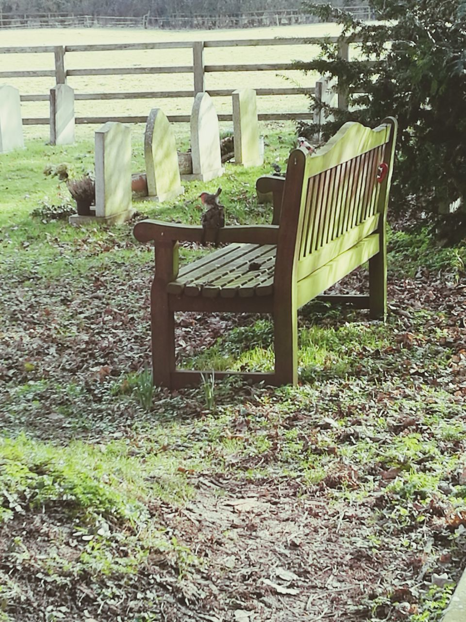 chair, day, outdoors, grass, no people, relaxation, seat, nature, tree, mammal