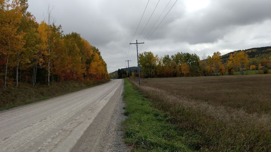 Tree Street Grass Sky Green Color Vanishing Point Tranquility The Way Forward Growth Nature Empty Road Outdoors Explore North No People Nature Northernontario Adventure