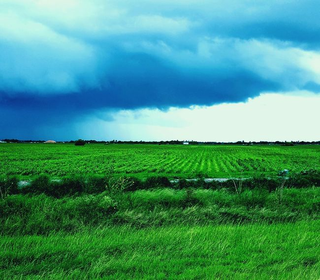 Rio Grande Valley Corn Fields Agricultural Land Agriculture Scenery_collection OpenEdit Nature Popular Photos Surrealism Photography Dreamer's Vision Nature_collection Sky_collection Clouds And Sky Rain Cloud Phone Photography Beginnerphotographer Field Of Dreams Memories Check This Out Picture Of The Day Imaginary Landscapes Landscape_photography JunePhotoChallenge Important Cultural Properties Landscape Dreamscapes Familiar Scenery Reminisce