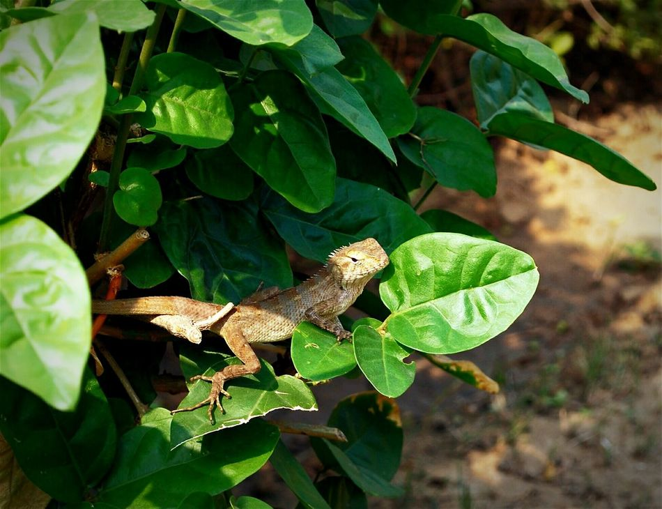 Reptile Nature <3  Sunny Day☀ Close-up Check This Out! Animal Themes Wildlife Hanging Out Taking Photos - at Gurgaon India