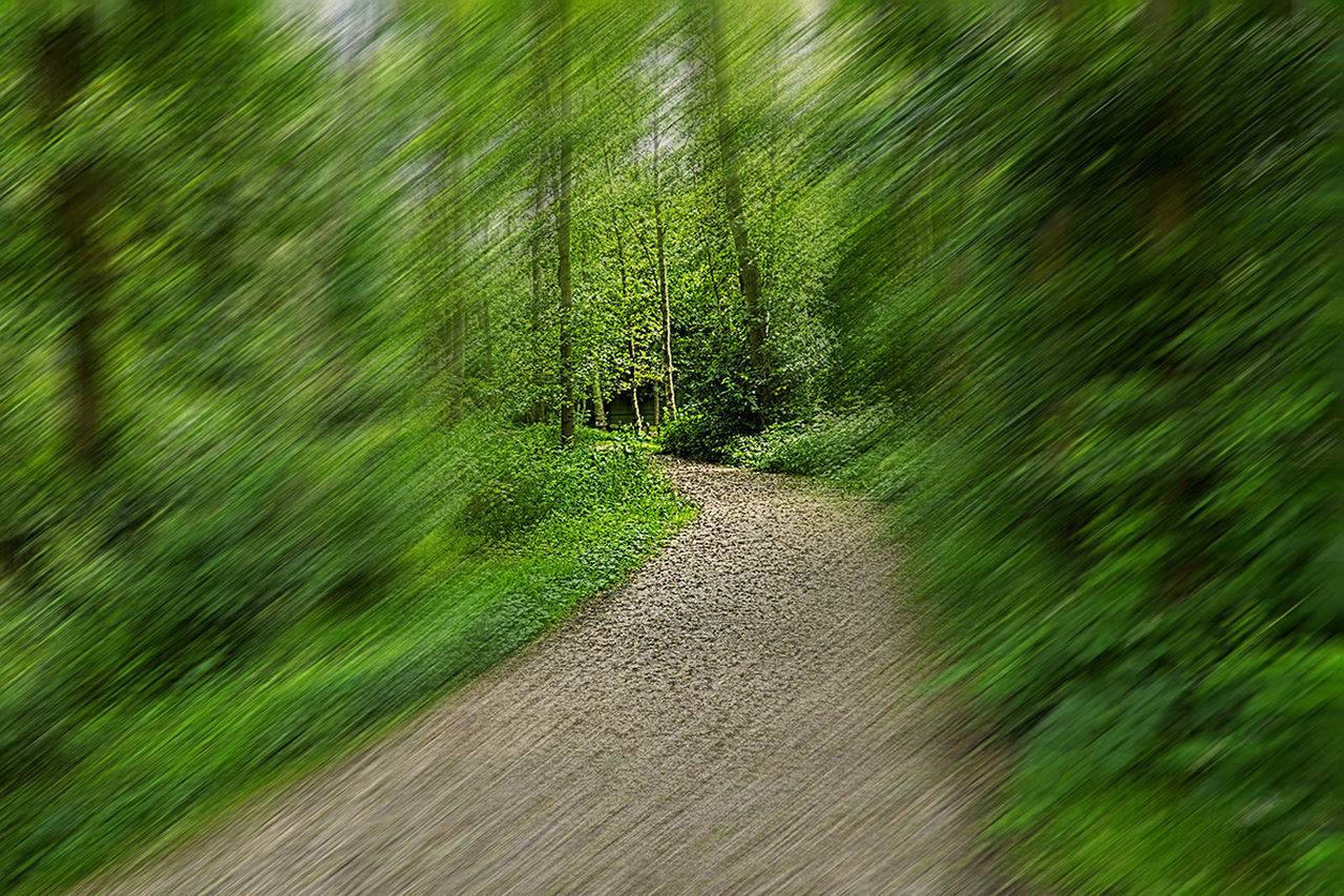 Beauty In Nature BOS Diminishing Perspective Dirt Road Footpath Grass Green Color Growth Landscape Nature Pathway Plant The Way Forward Tranquil Scene Walking Around Walkway Wouden