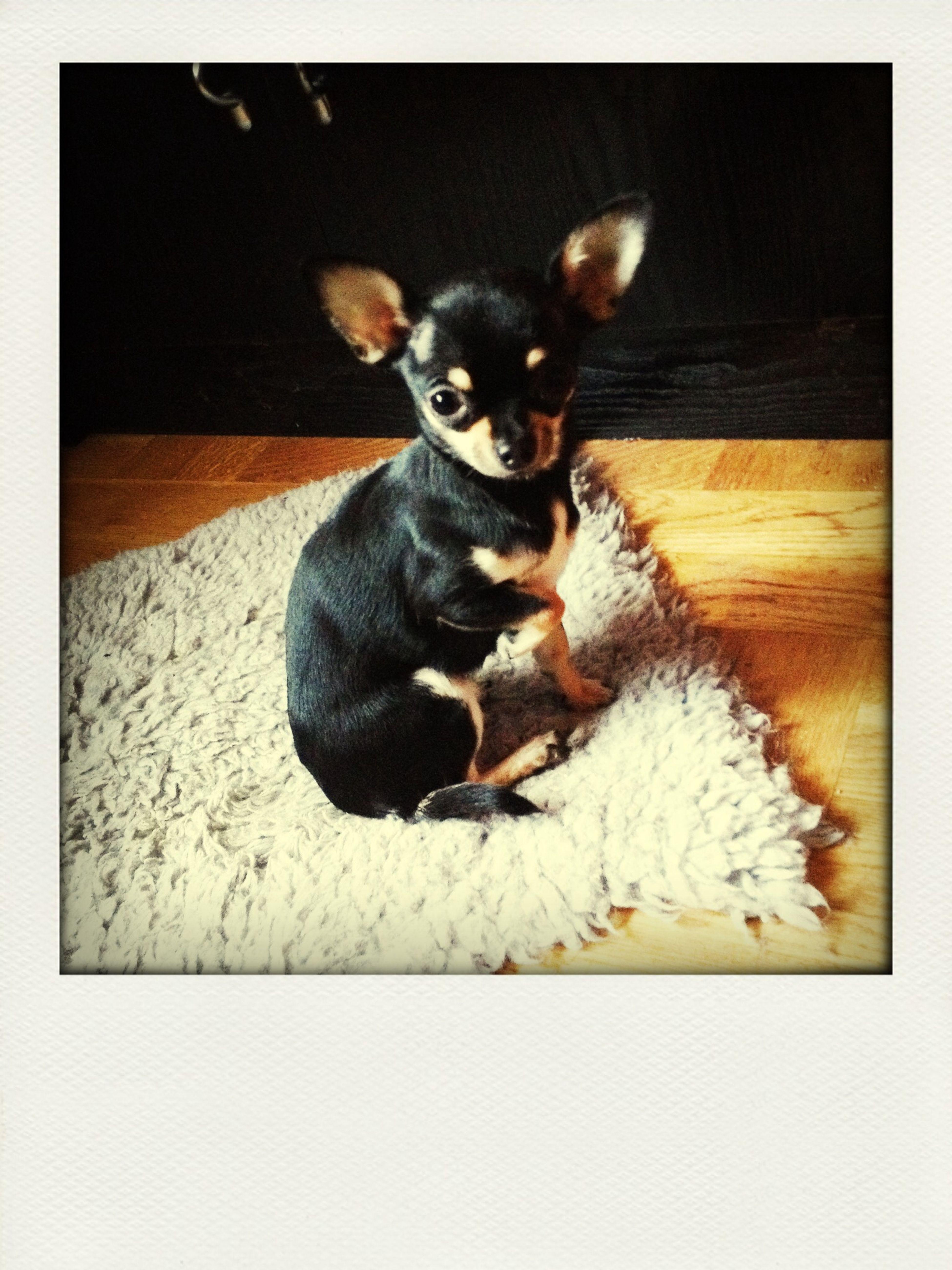 Min dotters hund