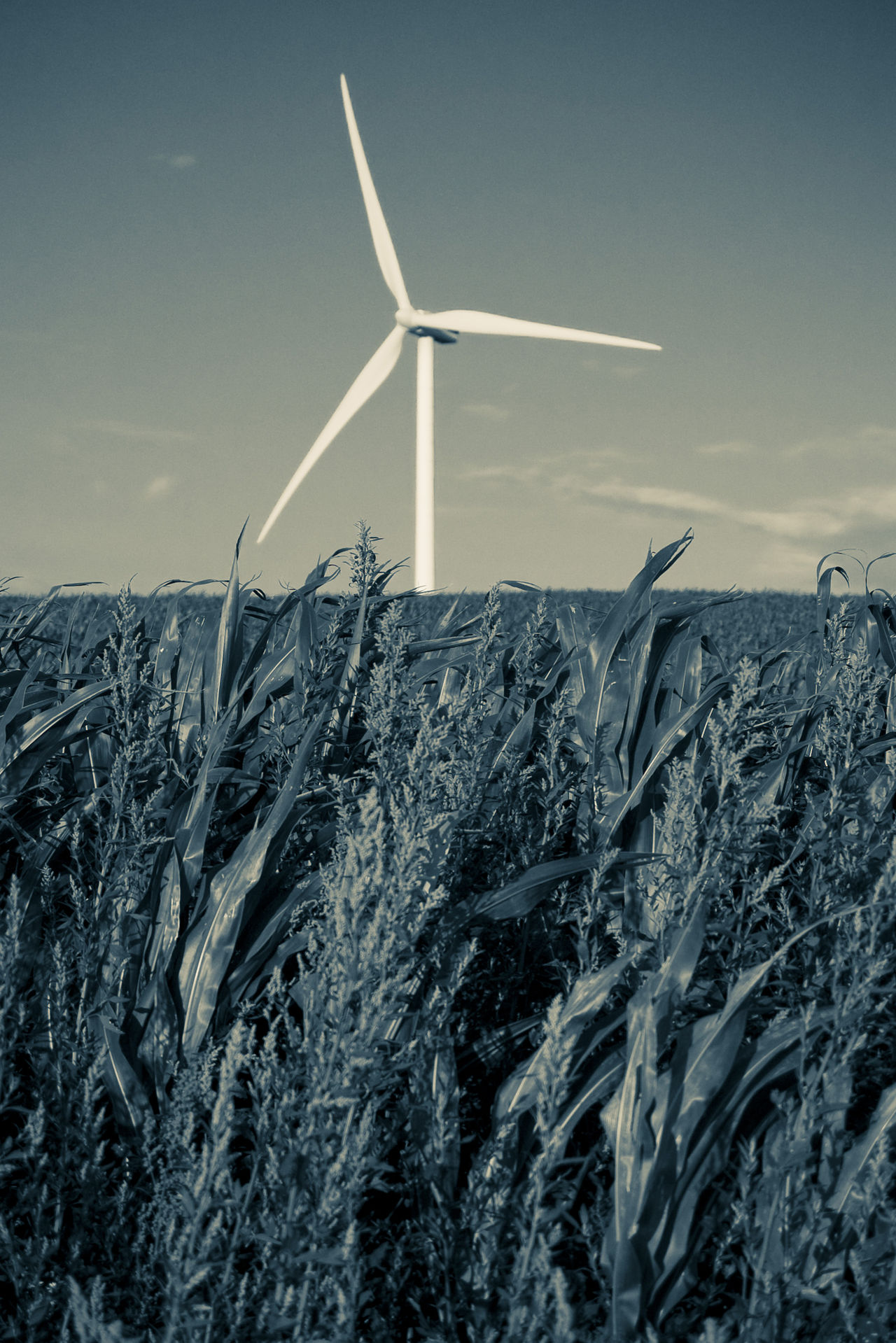 Alternative Energy Environmental Conservation Field With Wind Power Station Green Power Landscape Landscape With Power Station Monochrome Photography Outdoors Power Plant Power Plant In Field Technology And Nature Tone Splitting Wind Power Wind Power Generator