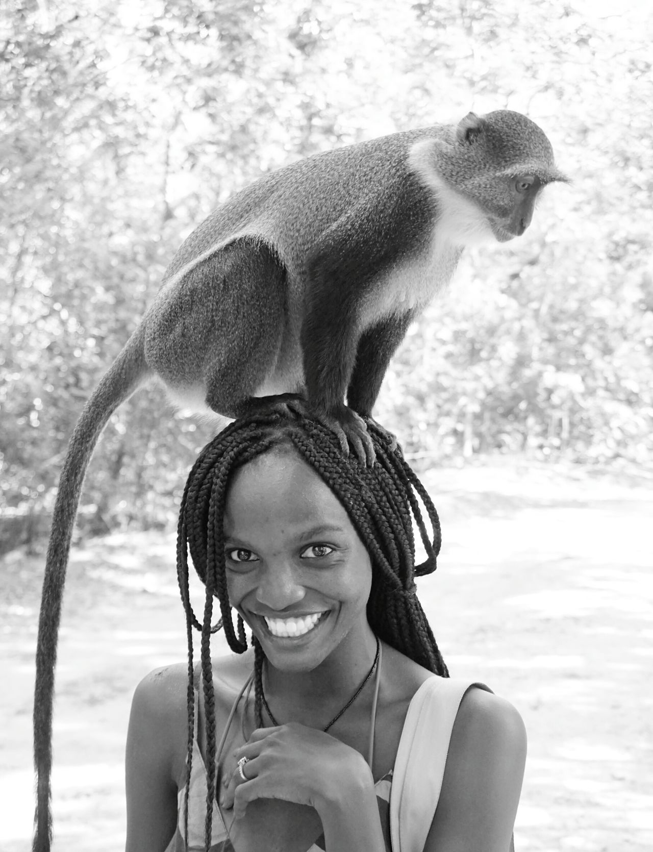 Beautiful stock photos of affe, 25-29 Years, African-American Ethnicity, Animal Themes, Animal Wildlife