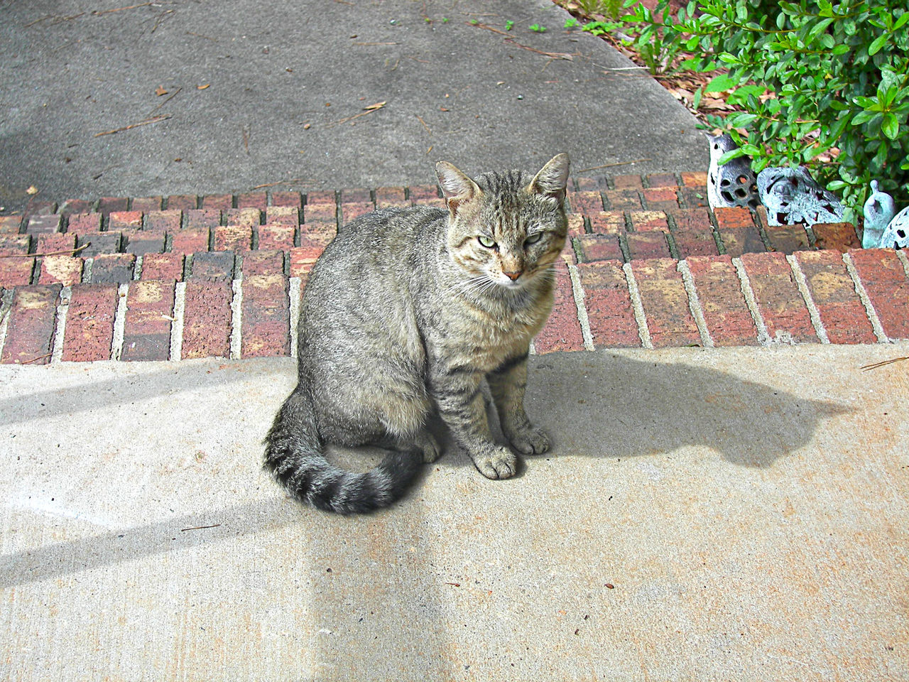 Animal Themes Day Domestic Animals Domestic Cat Feline Full Length High Angle View Looking At Camera Mammal No People One Animal Outdoors Pets Portrait Sitting Street