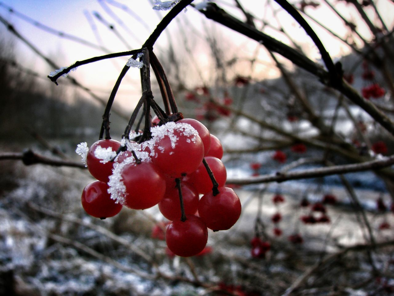 Beautiful stock photos of cherry, Beauty In Nature, Branch, Cherry, Close-Up