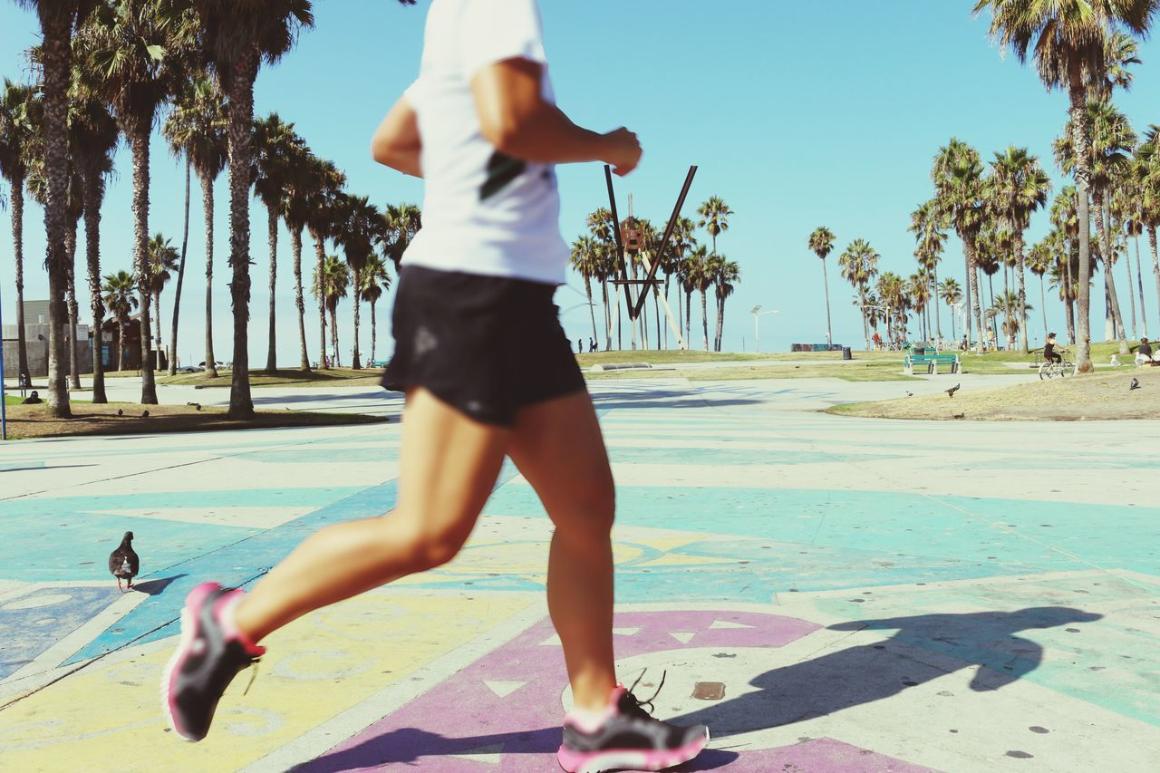 Beautiful stock photos of running, Bird, Day, Exercising, Focus On Foreground